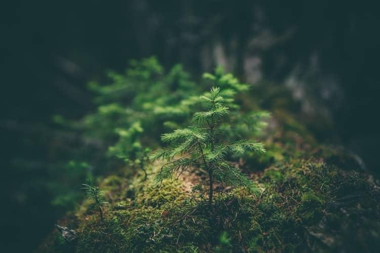 image offre arbres noel fêtes de fin d'année